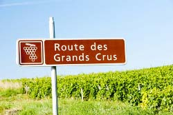Hike along the route of Grands Crus
